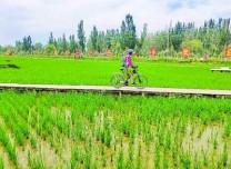 新疆阿克蘇溫宿縣:稻草主題公園讓村民腰包鼓起來