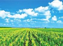 深耕幸福土地 共筑美麗鄉村——梨樹縣推廣黑土地保護性耕作掠影