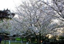 又到一年赏花时!这份春季赏花指南请收好