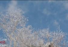 美!延邊仙峰森林公園迎今冬首次高山霧凇景觀