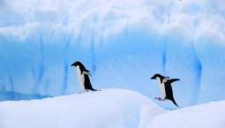 NASA对地观测卫星找到一项新用途:观测企鹅粪便?