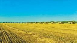今年我国将组织开展全国政策性粮食库存大清查
