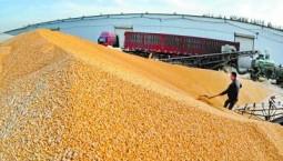 我国储粮技术世界领先 智能储粮成新趋势