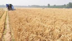 5月份农业农村经济运行总体平稳 夏粮生产量质齐升