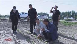 """新型農業技術帶頭人侯剛:致富路上的""""領頭羊"""""""