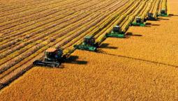 全年糧食生產再獲豐收 預計總產量保持在1.3萬億斤以上
