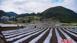 生態環境部:全國農用地土壤環境狀況總體穩定