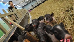 農業農村部擬修訂飼養場等五類場所動物防疫條件