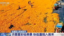 全国进入秋收时节   浓墨重彩绘美景 秋收喜悦入画来