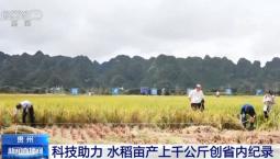 科技助力 | 贵州:水稻亩产上千公斤创省内纪录