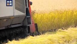 农业农村部:我国将确保水稻产量稳定在2亿吨以上