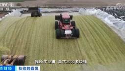 50多万吨花生秸秆有了好去处!每年为河南正阳县带来3.6亿多元收益