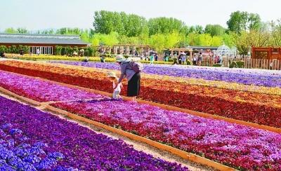 在鸟语花香里诗意栖居——从北京世园会看园艺业发展