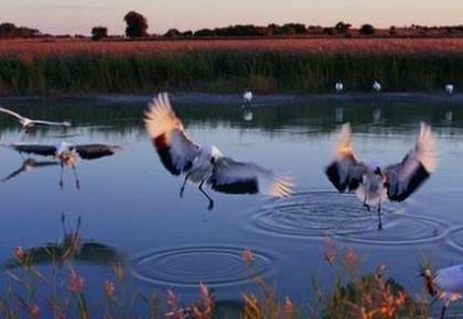 向海舞鹤:通榆向海自然保护区