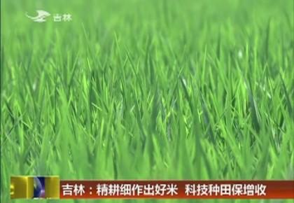 吉林:精耕细作出好米  科技种田保增收