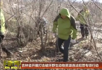 吉林省开展打击破坏野生动物资源违法犯罪专项行动