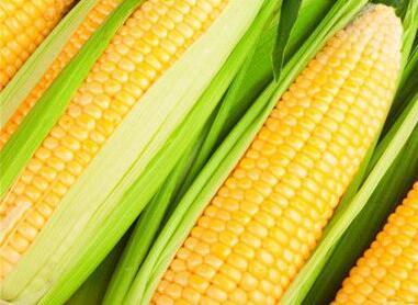 先浸泡半个小时 煮玉米也有这么多窍门!
