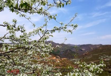 集安市举办第二届梨花节 暨朝鲜族民俗文化节开幕啦