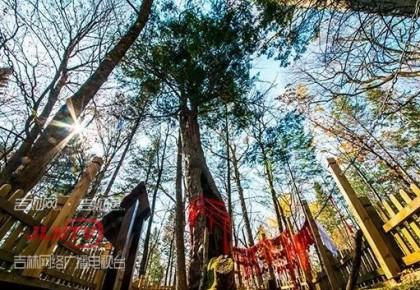 """吉林省最有名的3棵树,入选""""中国最美古树""""!你见过吗?"""