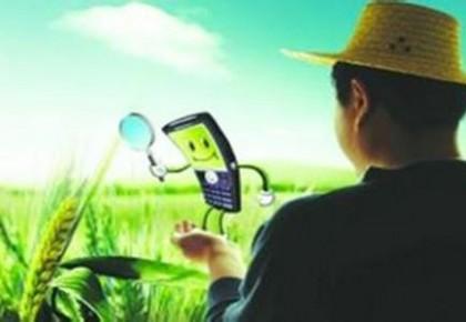 村里有了无线网 日子越过越滋润