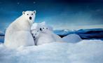 北极的冰快化完了!北极熊:快救救我