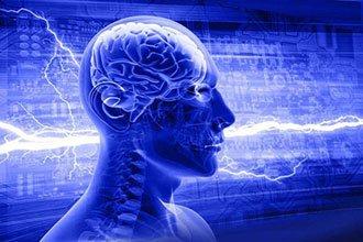 破解了结构之谜,就能再造大脑吗