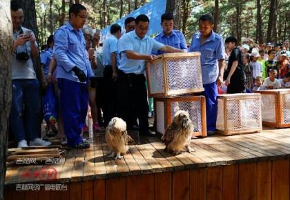 """【回归自然】16只猛禽""""康复出院"""" 今日在东北虎园内放飞"""
