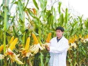 高校1725份科研玉米被偷 学生毕业论文成难题