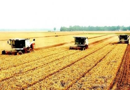 夏粮丰收,奠定全年粮食丰收基础