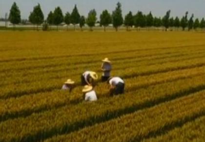 乡村振兴战略开局 农业农村经济稳中向优