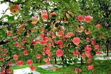 雨季,给果园喷农药要注意这六点!