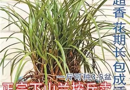 这种网上热销的野生植物,别再购买了!