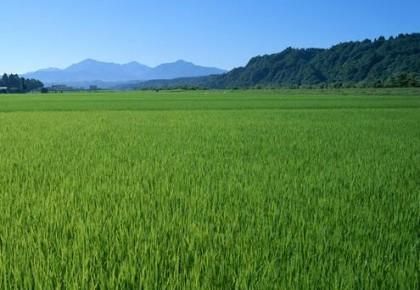 扩大黑土地保护试点  2020年我省将实现化肥农药零增长