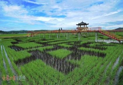 从光东村巨变看吉林省农村发展之路