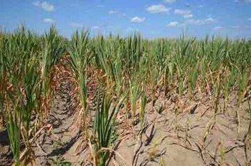 吉林部分地区旱情得到缓解