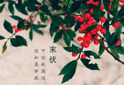 """三伏了,打理好""""衣食住行"""",秋冬少生病!"""