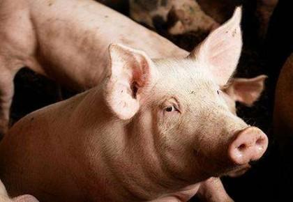 江苏连云港发生非洲猪瘟疫情 发病615头死亡88头
