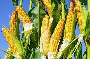 长春市农业项目招商推介会上现场签约12个项目、金额超20亿元