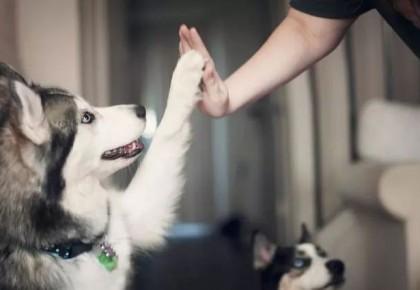 异烟肼毒狗,毒不出宠物文明