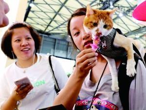 宠物经济创造商机,犬猫宠物市场规模已达到1700多亿