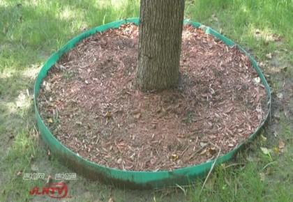 华丽变身|碎树枝变废为宝 再加工生态环保