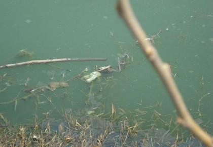 长春水源地污染问题,初步认定5人担责!