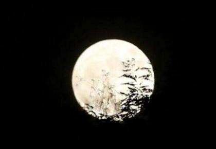 数完一亿粒米了?新的作业已到货:画30天的月亮……