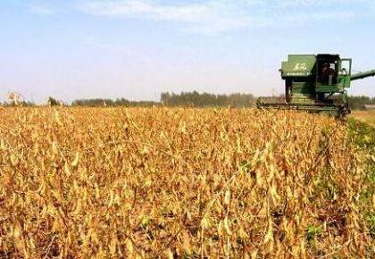 万博手机注册省大豆种植面积呈恢复性增长 今年新增超过70万亩