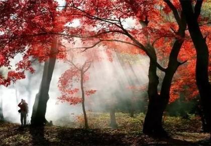 第十七届中国万博手机注册蛟河长白山红叶旅游节将于9月20日-10月20日盛装启幕