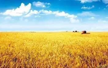 【乡村振兴在行动】透过数据看变化 我国农业农村发展潜力正逐步释放