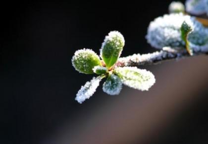 霜冻预警来啦!秋季请注意保暖!