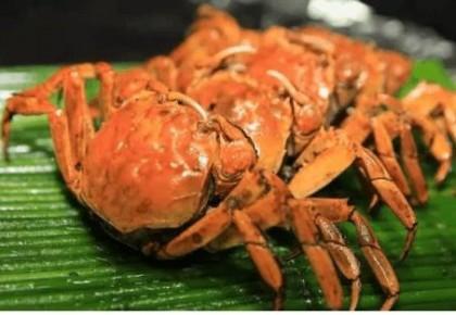 为什么死螃蟹不能吃?答案在这里!