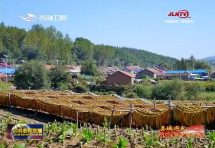 县域巡礼•在改革开放中成长:永兴处处金叶香