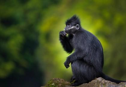 """【动静直击】解密地球造山、追寻黑叶猴、探秘恐龙蛋窟……第四届跨界科考启动,跟随""""动静""""了解一下"""